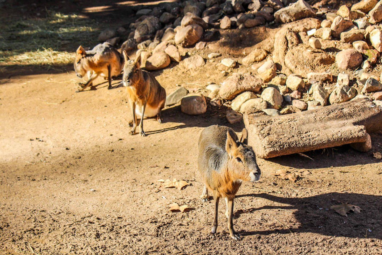 zoo barcelona (21)