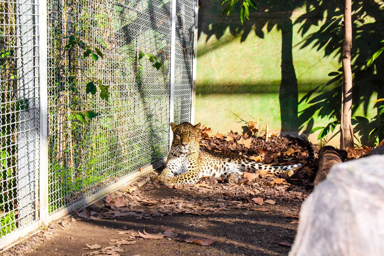 zoo barcelona (28)