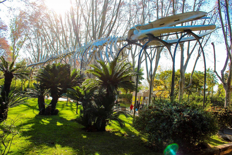 zoo barcelona (51)