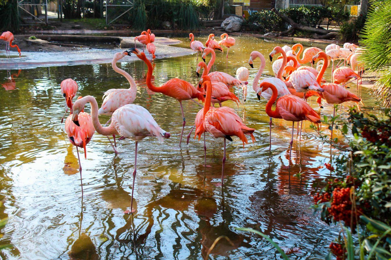 zoo barcelona (7)