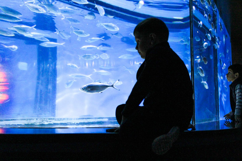 aquarium barcelona (11)