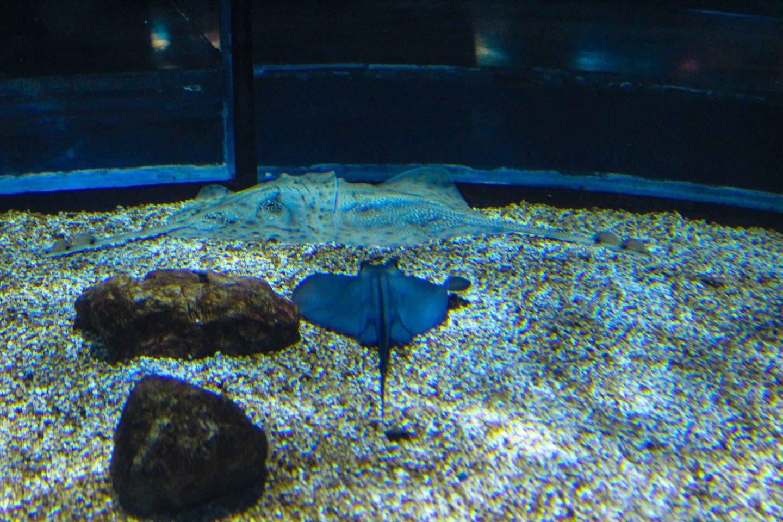 aquarium barcelona (14)