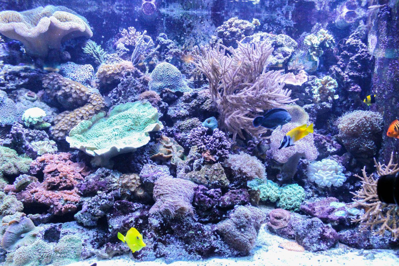 aquarium barcelona (16)