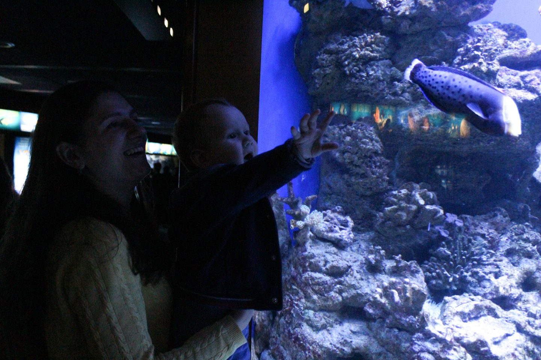 aquarium barcelona (17)