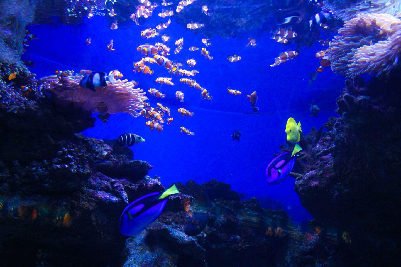 aquarium barcelona (19)