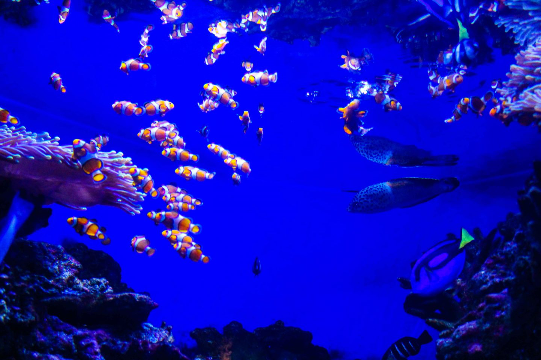 aquarium barcelona (20)