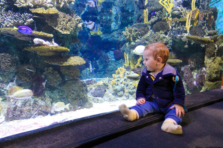 aquarium barcelona (25)
