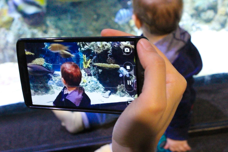 aquarium barcelona (26)