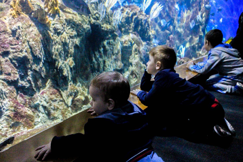 aquarium barcelona (3)