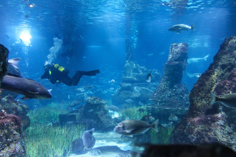 aquarium barcelona (32)