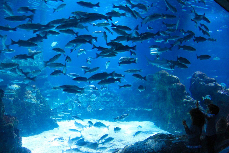 aquarium barcelona (35)