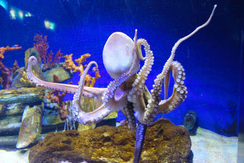 aquarium barcelona (37)