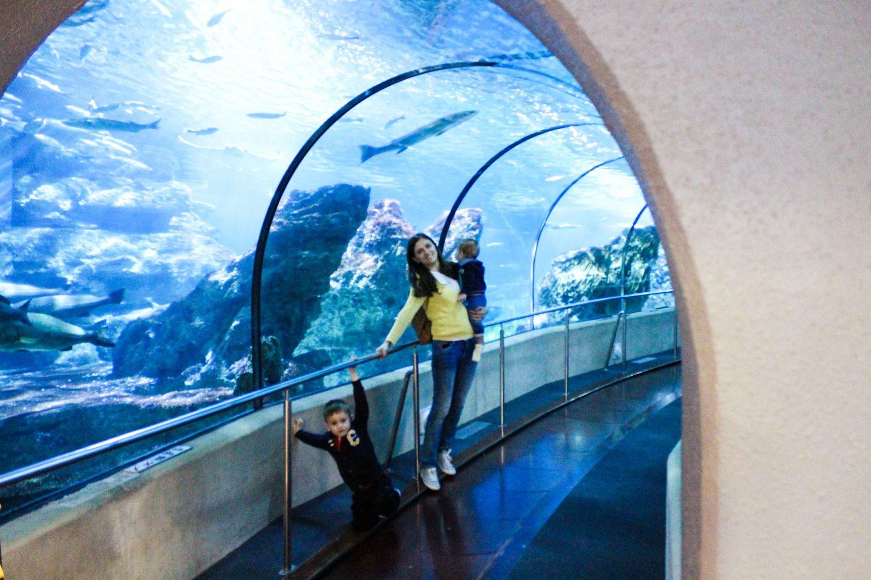 aquarium barcelona (39)