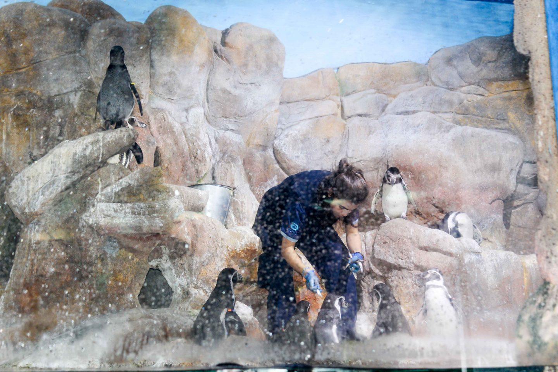 aquarium barcelona (52)