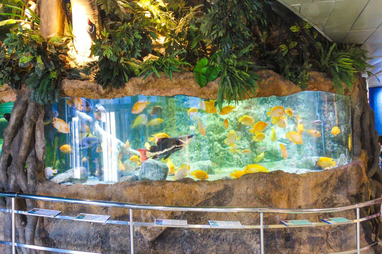 aquarium barcelona (53)