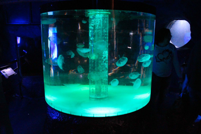 aquarium barcelona (54)