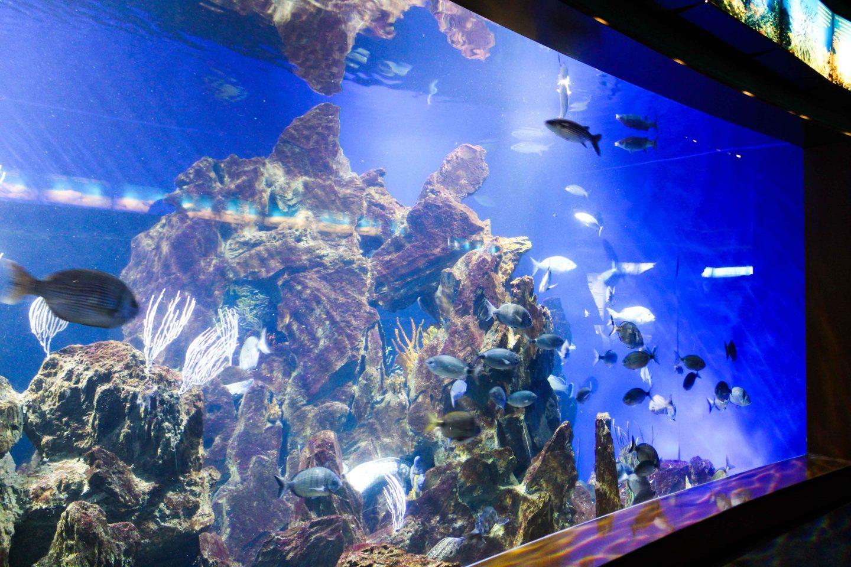 aquarium barcelona (62)