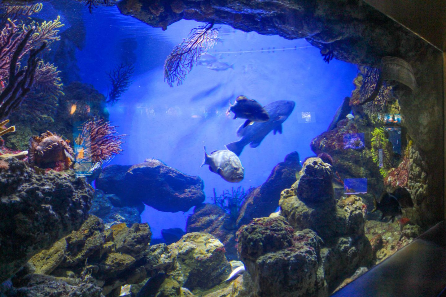 Aquarium Gift Guide. Share the wonders of the aquatic world when you give National Aquarium tickets or memberships, or make a donation in honor of a loved one!