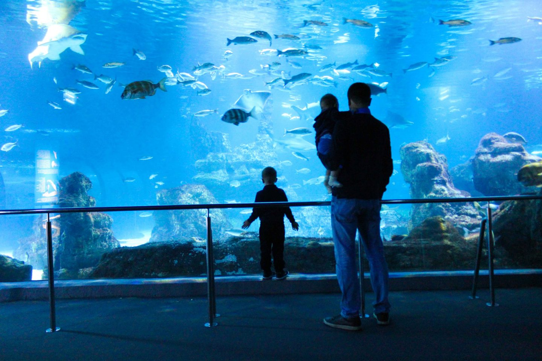 aquarium barcelona (74)