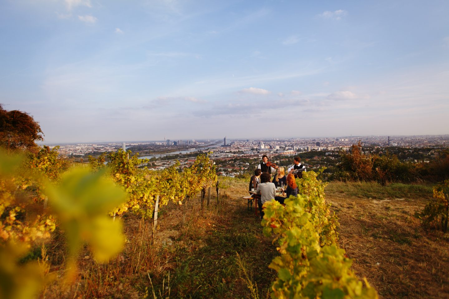 © WienTourismus Peter Rigaud_Wieninger vineyard on the Nussberg