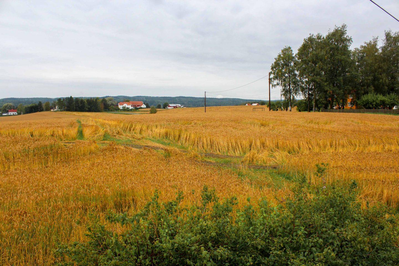 farm norway (14)