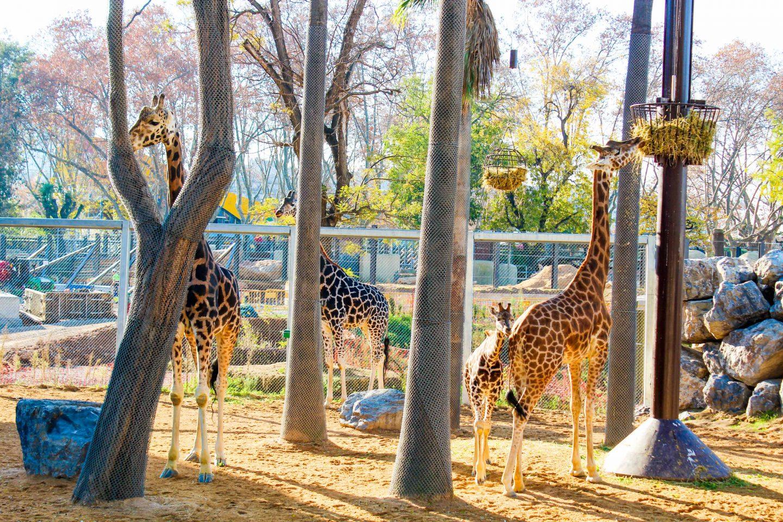 zoo barcelona (12)