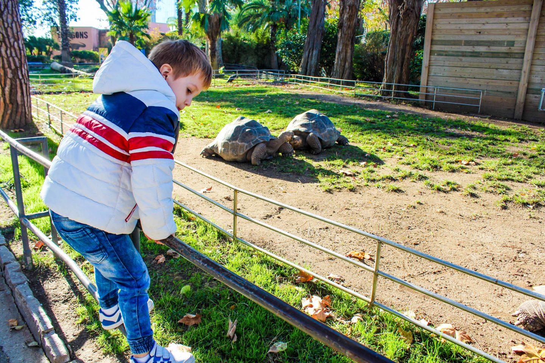 zoo barcelona (19)