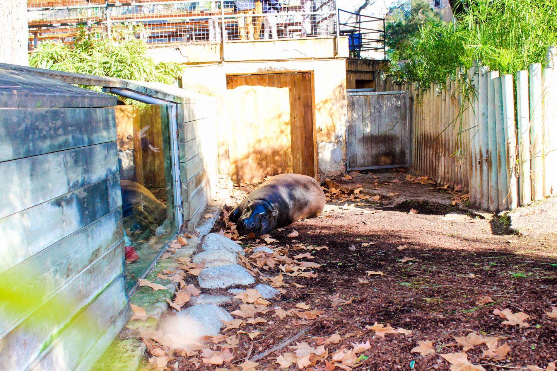 zoo barcelona (20)
