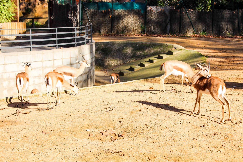 zoo barcelona (24)