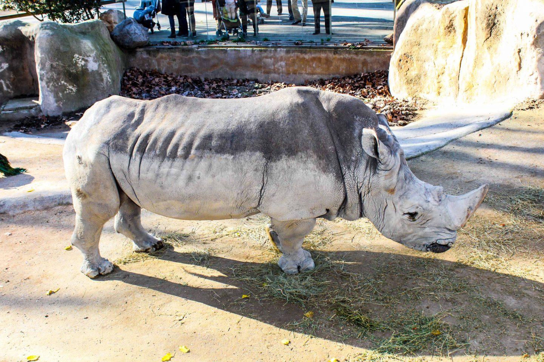 zoo barcelona (41)