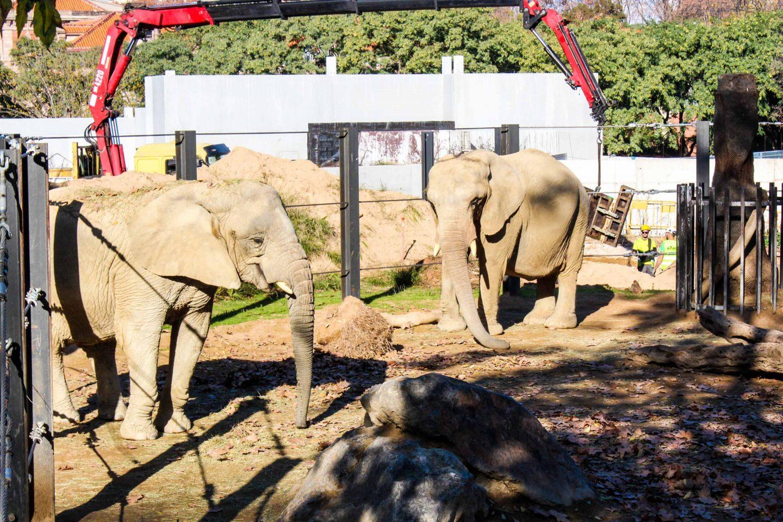 zoo barcelona (44)