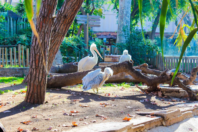 zoo barcelona (6)