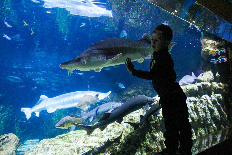 aquarium barcelona (10)
