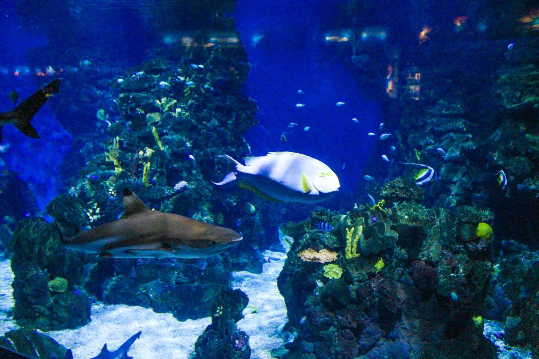 aquarium barcelona (12)