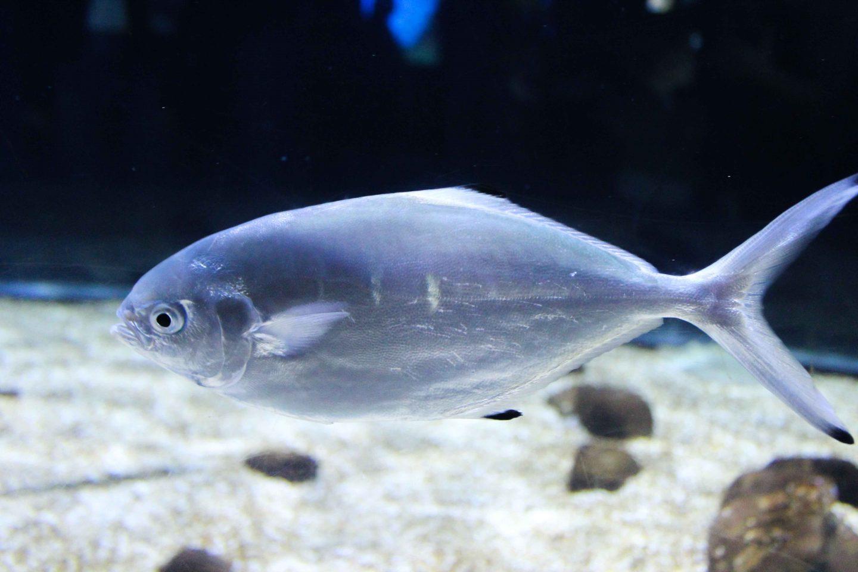 aquarium barcelona (15)
