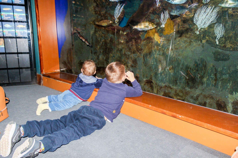 aquarium barcelona (2)