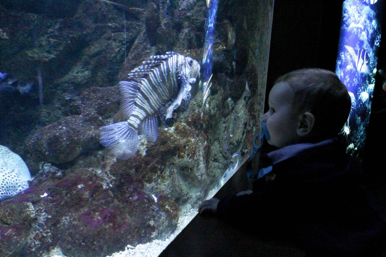 aquarium barcelona (21)