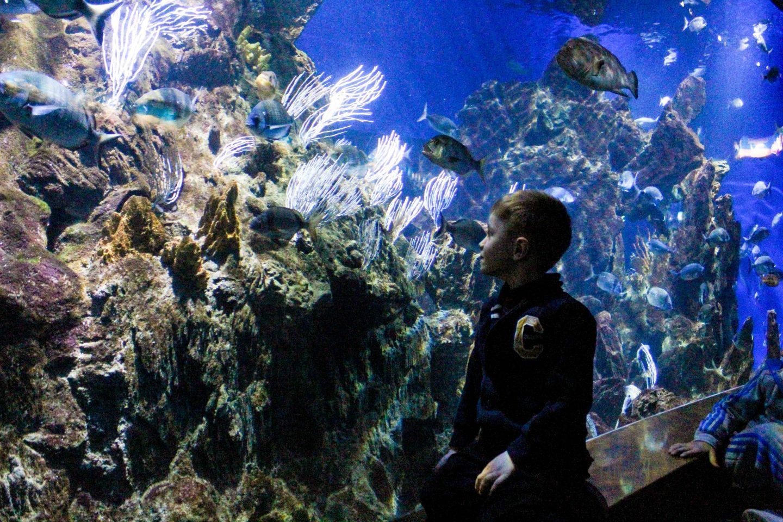 aquarium barcelona (4)