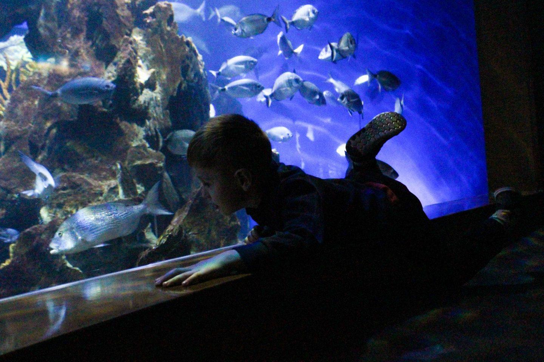 aquarium barcelona (6)
