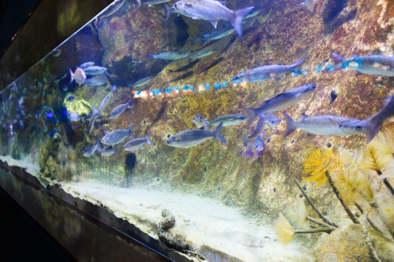 aquarium barcelona (61)