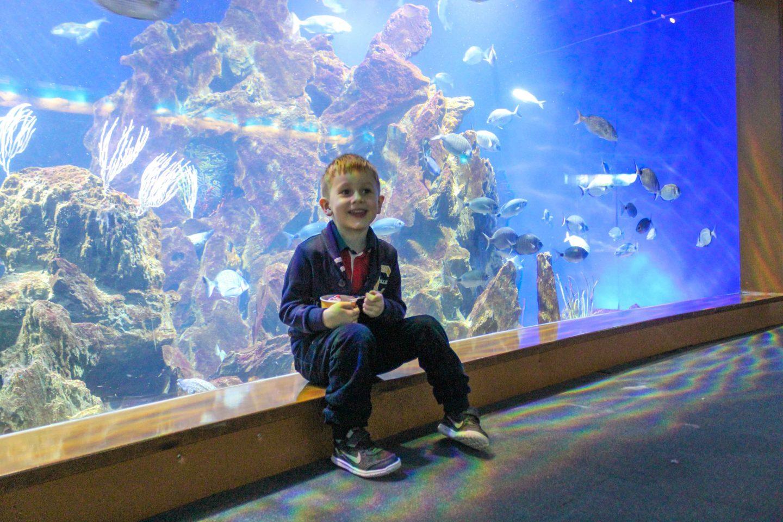 aquarium barcelona (63)