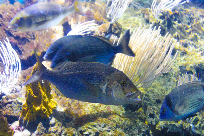 aquarium barcelona (64)