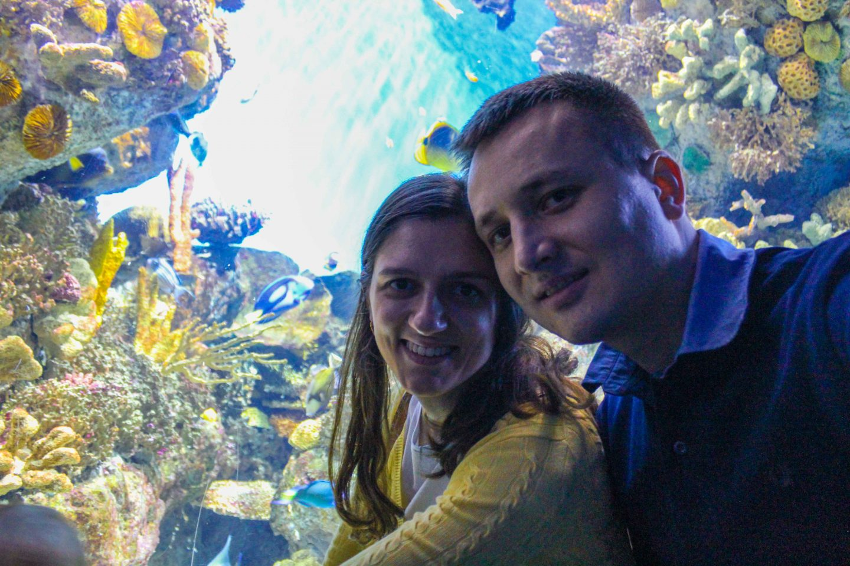 aquarium barcelona (72)