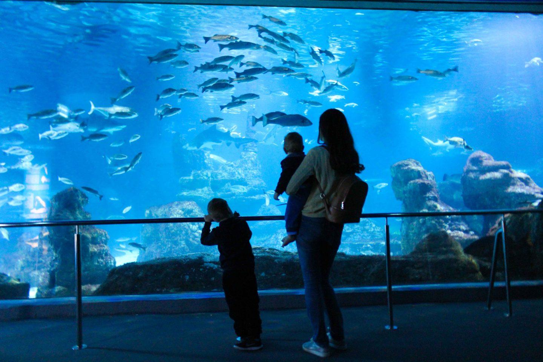 aquarium barcelona (76)
