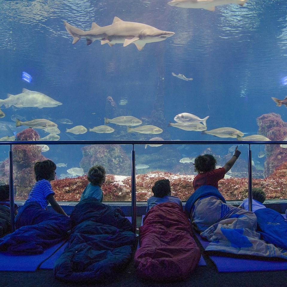aquarium barcelona foto