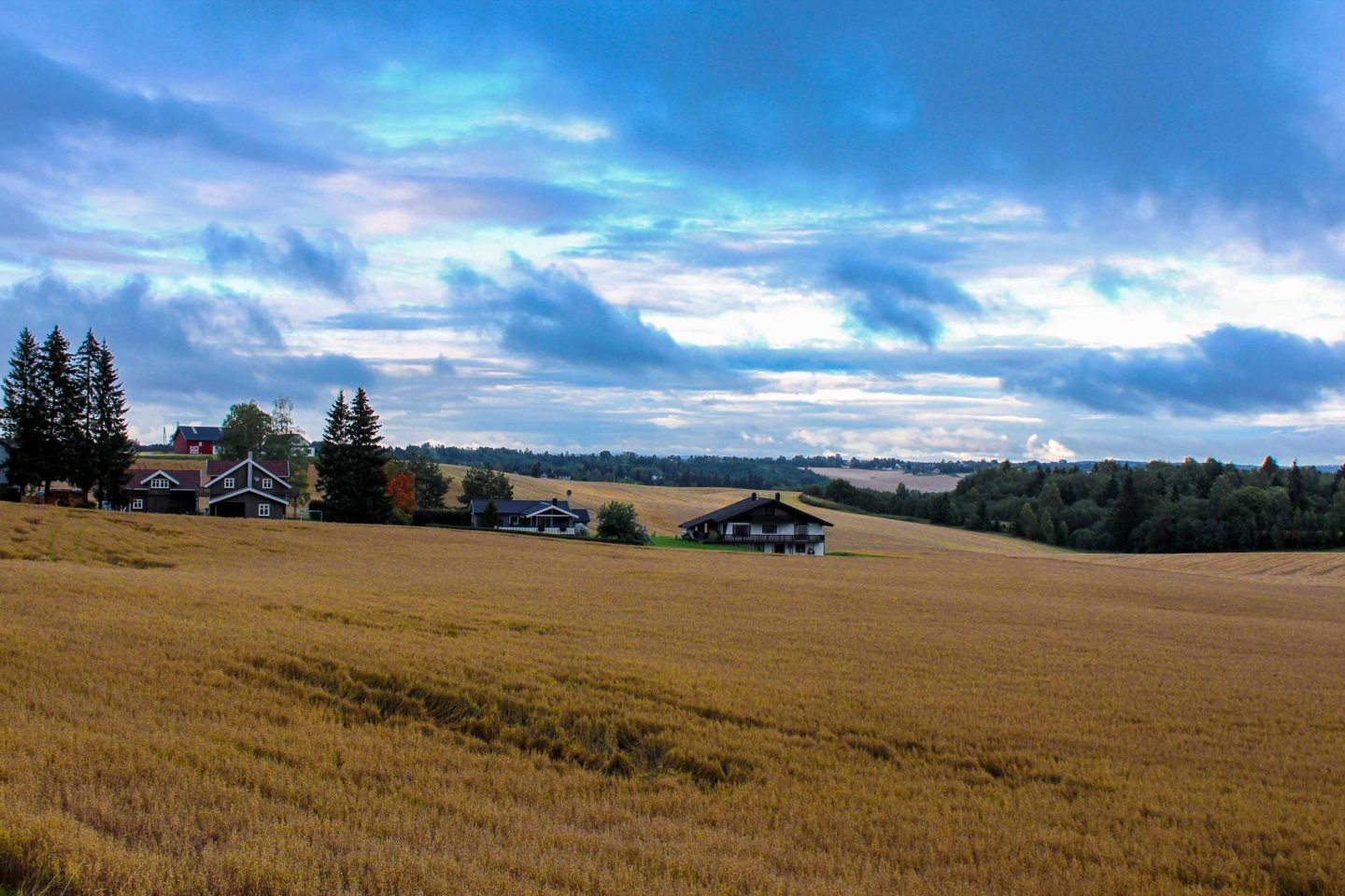 farm norway (19)