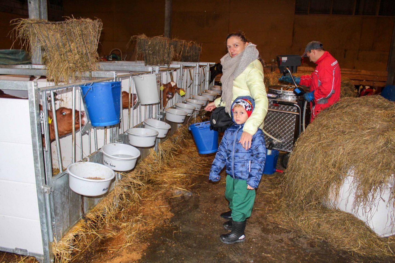 farm norway (24)