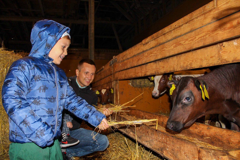 farm norway (28)
