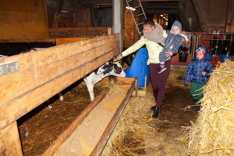 farm norway (31)