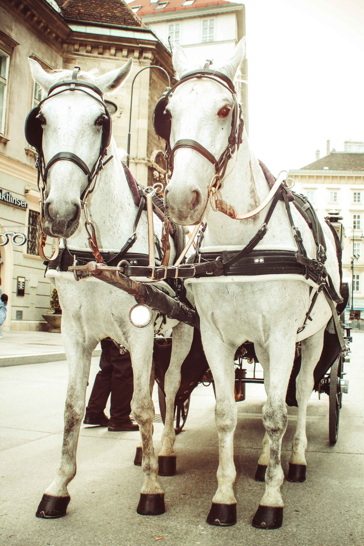 How to incorporate carriage transportation into your New Orleans Wedding?